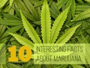 Facts You Need to Know About Marijuana